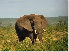 Elephant-02